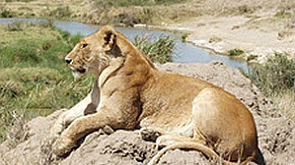 Safari Tanzania by Ebony Tours & Safaris